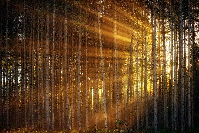 Nábytek z borového masivu není dřevotříska