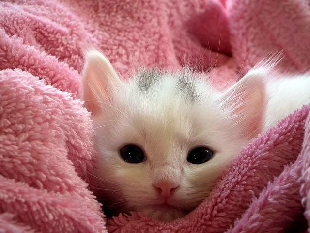 Vlněné deky